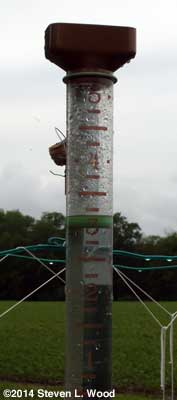 Rain gauge showing 3.1 inches