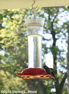 Birdscapes feeder