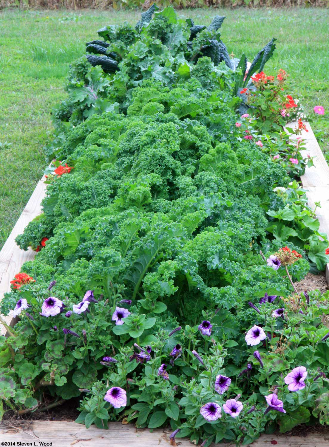 The old guys garden blog november 2014 don smith sent me an interesting link yesterday for free kindle ebooks on gardening fandeluxe Choice Image
