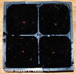 A fourpack insert seeded to geraniums