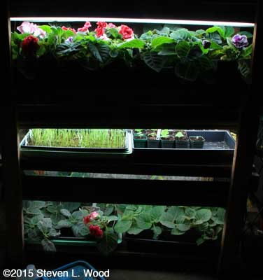 Plant rack and lights