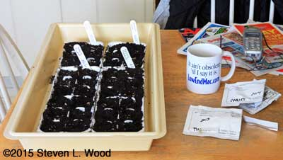 Seeding petunias in egg cartons