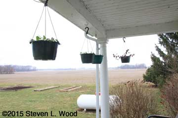Hanging baskets under porch