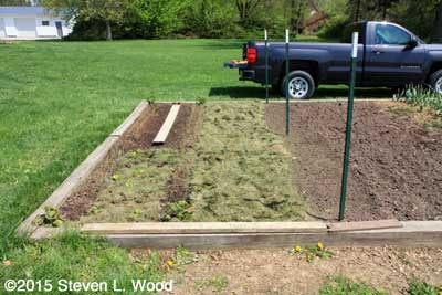 Peas planted and aisle mulched