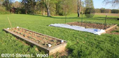 Floating row cover over softbed
