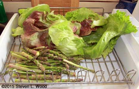 Lettuce as asparagus