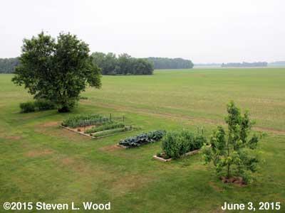 Our Senior Garden - June 3, 2015