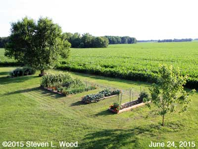 Our Senior Garden - June 24, 2015