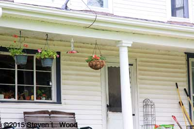 Hanging baskets and hummingbird feeder under back porch roof