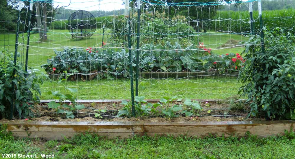 Tomato, cucumber, and now flower bed