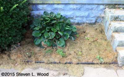 Left front flowerbed