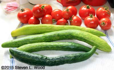 JLP Cucumbers and various tomatoes
