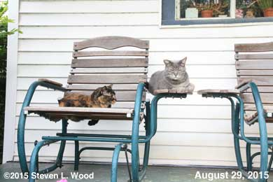 Callie Jo and Dolly on porch, August, 2015