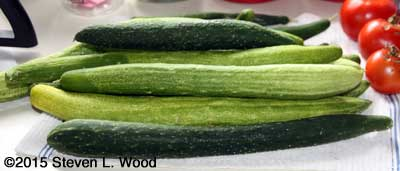 Several strains of Japanese Long Pickling Cucumbers