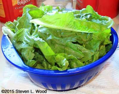 Cleaned lettuce