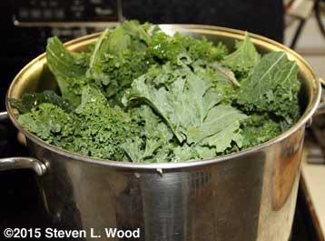Feeding kale to the pot