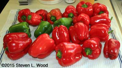 Earliest Red Sweet bell peppers