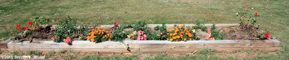 Narrow raised bed with flowers