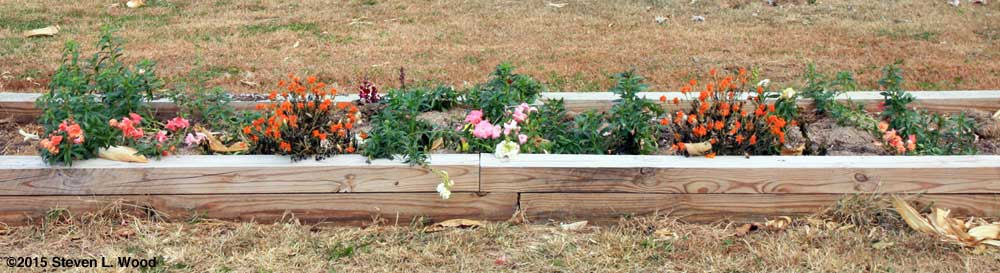 Narrow raised bed with flowers before renovation
