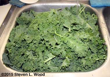 Kale soaking
