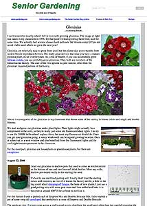 Gloxinia blog