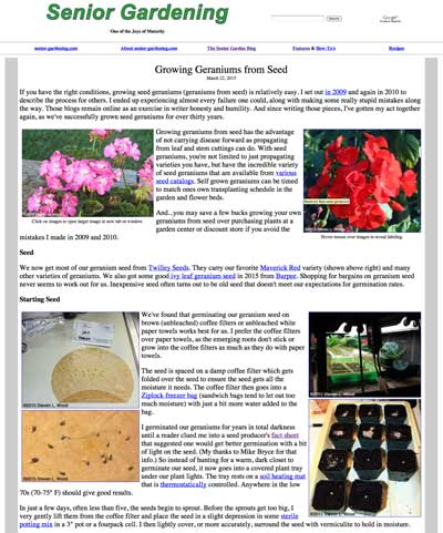 Growing Seed Geraniums