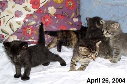 the five kittens