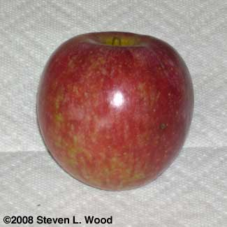 Sooty mold removed from apple