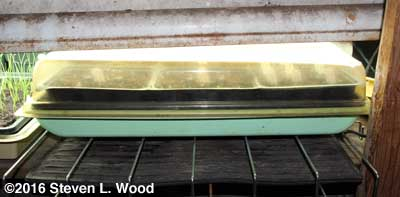 Tray over heat mat, under lights