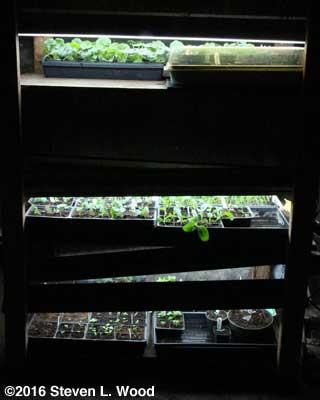 Nearly full plant rack