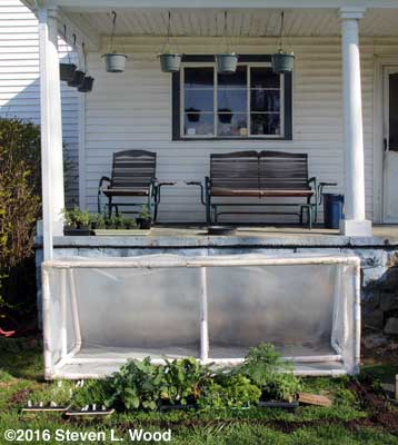 Cold frame and back porch