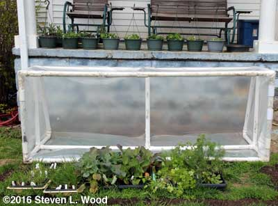 Cold frame and porch plants