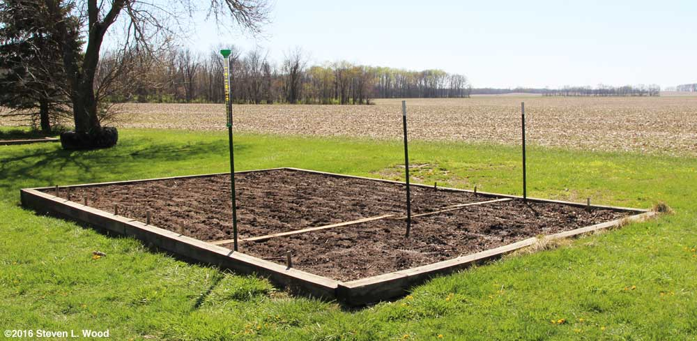 Main raised bed staked