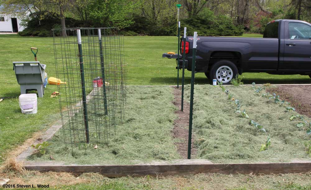Tomatoes, peppers, peas, brassicas, and onions planted and mulched