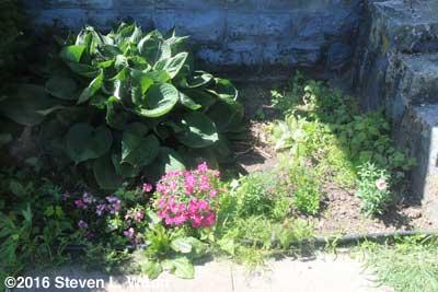 Weedy flowerbed