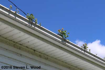 Gutters to clean