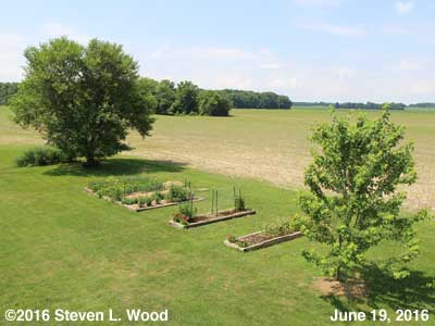 Our Senior Garden - June 19, 2016