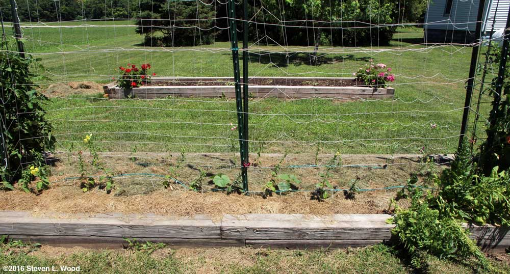 Cucumbers and snapdragons mulched