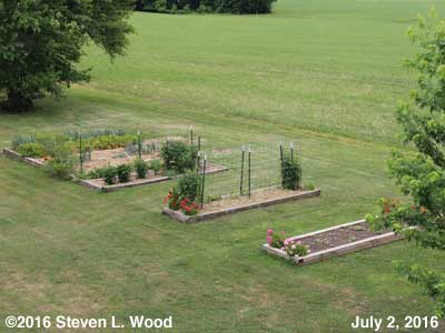 Our Senior Garden - July 2, 2016