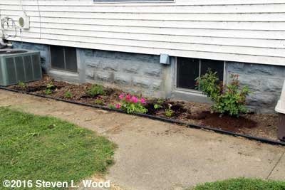 Hosta, lavender, petunias, vinca, and rose bush