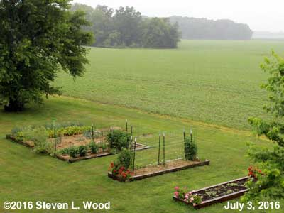 Our Senior Garden - July 3, 2016