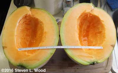 Large Avatar melon cut