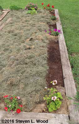 Spinach row seeded