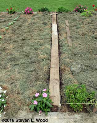 Carrot row planted, covered with walking boards