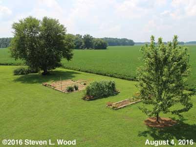 Our Senior Garden - August 4, 2016
