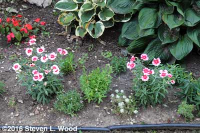 Right front flowerbed