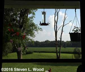 Hummingbirds at feeder through kitchen window
