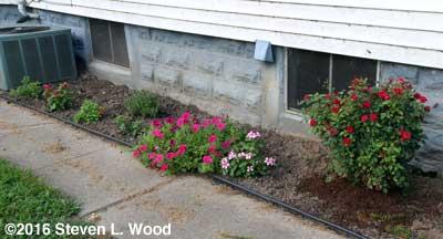 East flowerbed