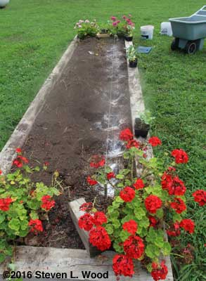 Lime, fertilizer, and egg shell added to planting holes