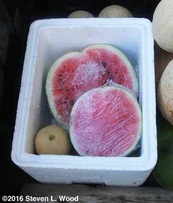 Watermelon halves on ice
